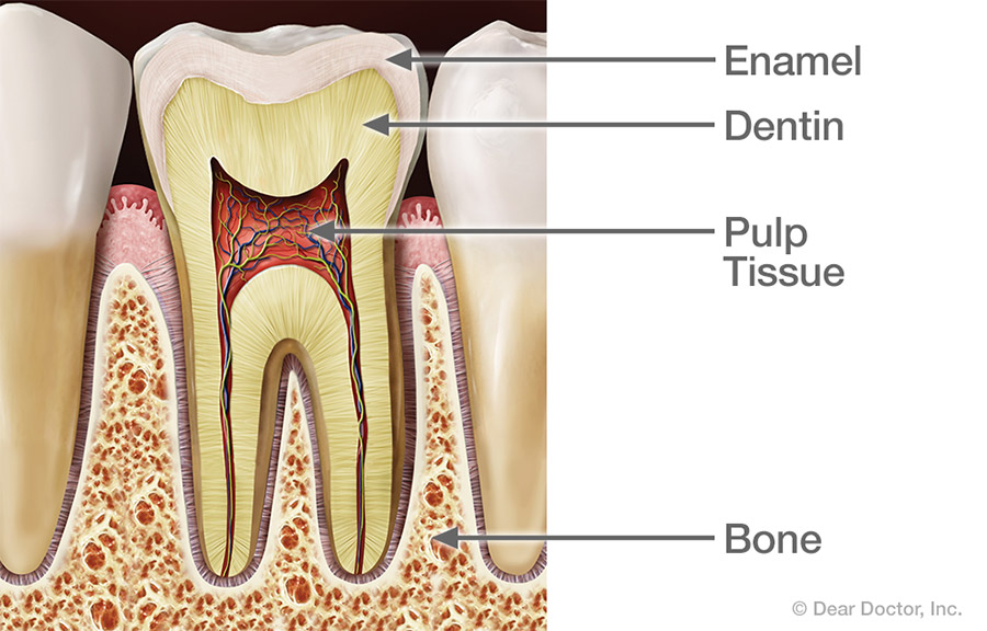Healthy tooth